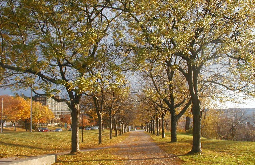 Fall colors along Battery Street in Burlington, Vermont